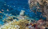 Plastic waste threaten health of Tubbataha Reefs in Palawan