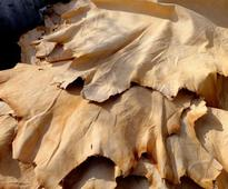 What to do with slaughtered animals\\' hides, skins