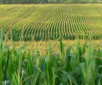 Cropcast Friday: Midwest is warmer in the 6-10 day period