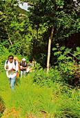 Western Ghats denuding faster than Bengaluru!