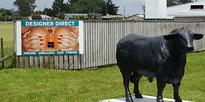 Storm in a C-cup? Bare breast billboard causes a stir in Bulls