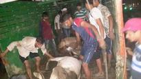 Cow carcasses in truck: Police to slap NSA o...