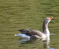 South Korea Reports New Case Of Bird Flu