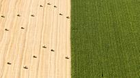 GMOs and Engineered Food