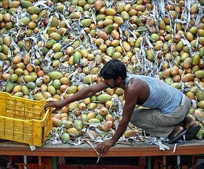 Decks cleared for export of Indian mangoes to Australia