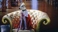 Dogs dress up for Paws for Art at National Gallery of Australia's Versailles