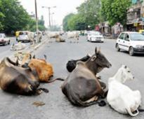 CM takes stock of cattle menace and traffic chaos