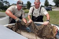The newest weapon in the Asian carp fight: Alligator fish