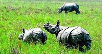 5 poachers arrested in Orang