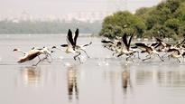 Thane Creek part of study on flamingoes