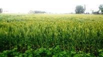 Despite rains and lower rates, dip in fertiliser sales