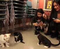 SFU students paws for first Kitten Therapy session stress relief