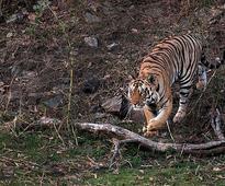 Shoot-at-sight orders at Corbett Tiger Reserve to stop poaching