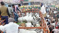 Cow smugglers fire at police, three arrested