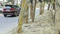 Gurgaon NGO will move green tribunal to remove concrete around trees