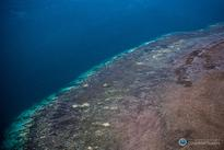Report of Great Barrier Reef's death mostly exaggerated