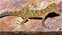 Mumbai: Dead lizard found in mess food of govt run hostel