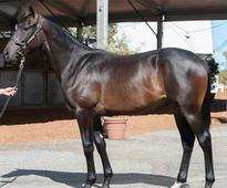 Street Cry Colt Tops Perth Sale Finale