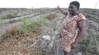 Brazil's quilombos face eucalyptus giant in land war