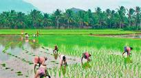 Kerala: Agriculture department cracks down on illegal fertiliser sale