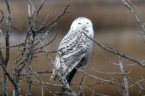 Appeals Court: Airports have Wide Latitude to Kill Birds