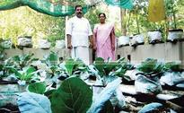 This teacher couple shows how to be self-sufficient