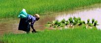Trade and investments agreements block progress on agroecology and food sovereignty