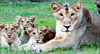 Parliamentary panel to visit Gir for two days