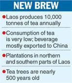 Local flavour to Laos tea promotion