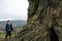 Film review: A Monster Calls - the tale of a tree monster and a troubled boy will grow on you
