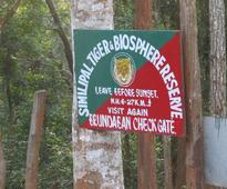 Fresh tiger census in Similipal from today