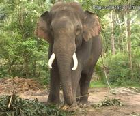 Ex-sarpanch killed, wife injured in wild elephant attack
