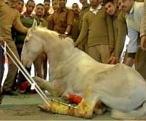 Police horse Shaktiman's statue removed from Dehradun's Vidhan Sabha Marg