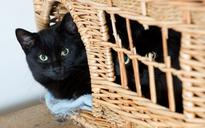 Black cats shunned at rescue shelter because they don't look good in selfies
