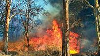 Was Bandipur forest fire a call for attention?