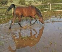 Taking a horse through water
