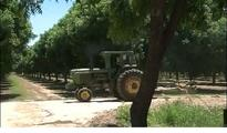 NMSU pecan research gets federal...