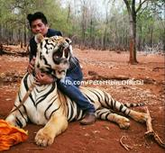 Peter Hein's playtime with tiger at Mohanlal's Pulimurugan set [VIDEO]