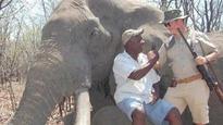 Zimbabwe parks authority selling animals