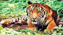UP to set up first Tiger Reserve Centre in Pilibhit