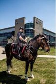 Watch woman slap police horse, then get kicked