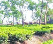 Jumbos go on rampage in Assam-Arunachal Pradesh border area