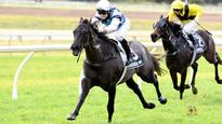 Barabas forerunner to home track action for Logan and Gibbs stable