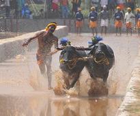 Karnataka sees pro-Kambala uprising