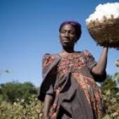 ITC To Advance Africa's Cotton Trade In Asia