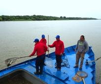 Sturgeons released into the Volga in Astrakhan Region under CPC environmental project