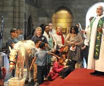 Cathedral holds St Francis Day for animal blessings