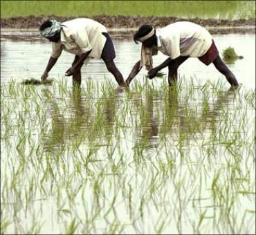 Centre's 7-point strategy to double farmers' income