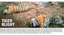 Tiger cubs may have been poisoned to death