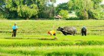 Mindanao Business Council says US agriculture investors welcome
